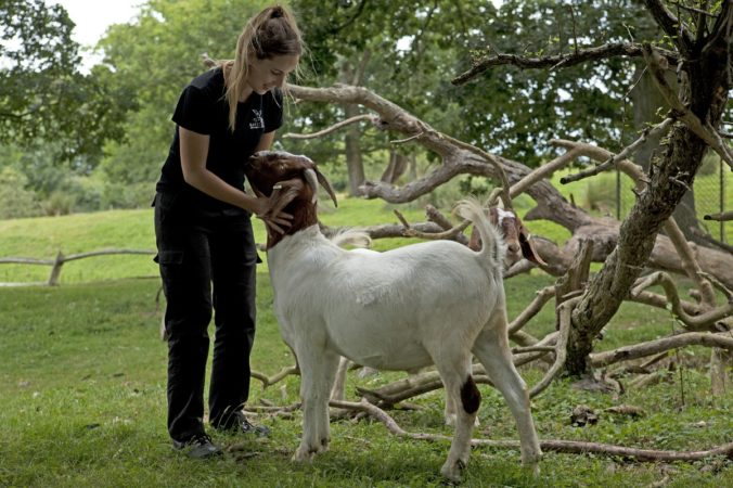Raystede Centre for Animal Welfare